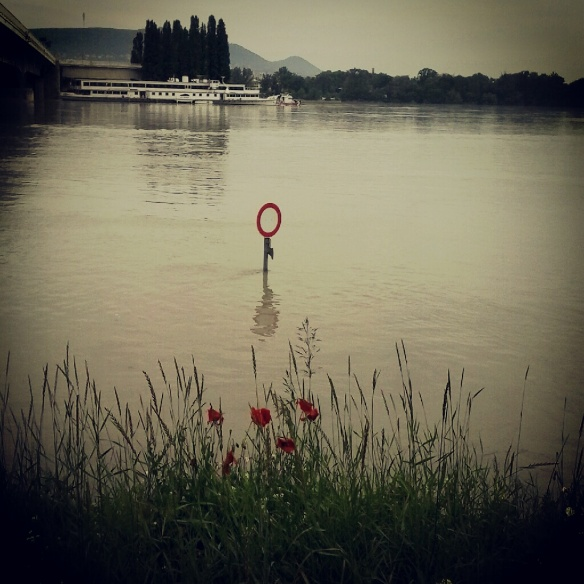 árvíz 2013 pipacs